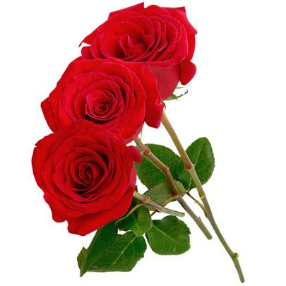 3 Rosas Colombianas